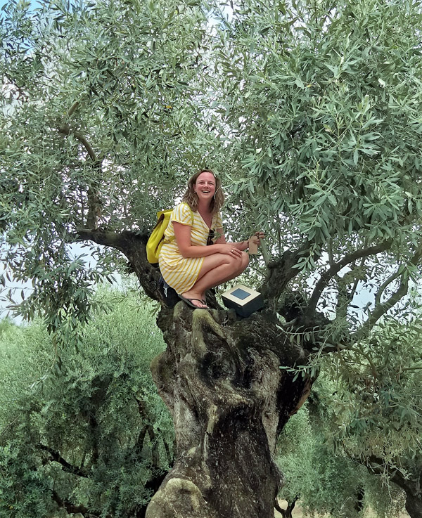 olive trees and hidden treasures