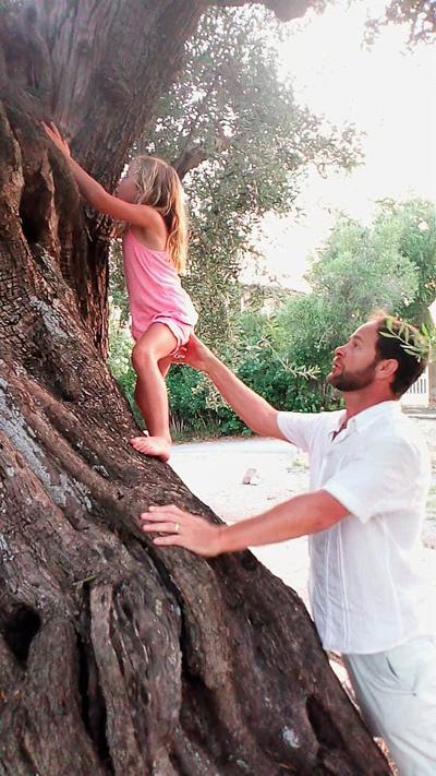 olive tree journey